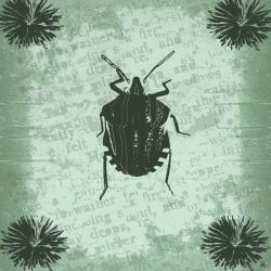 Ankan 'Vintage Insect I' Gallery-wrapped Canvas Art