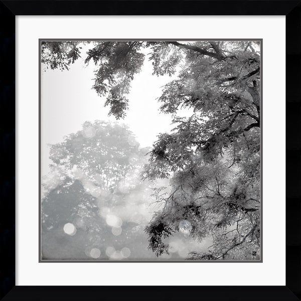 Wild Apple Photography 'Sun Dappled II' Framed Art Print