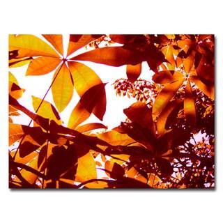 Amy Vangsgard 'Light Coming Through Tree Leaves' Medium Contemporary Canvas Art