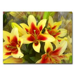 Amy Vangsvard 'Lillies' Medium Canvas Art