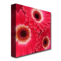Amy Vangsgard 'Magenta Gerbers' Gallery-Wrapped Canvas Art