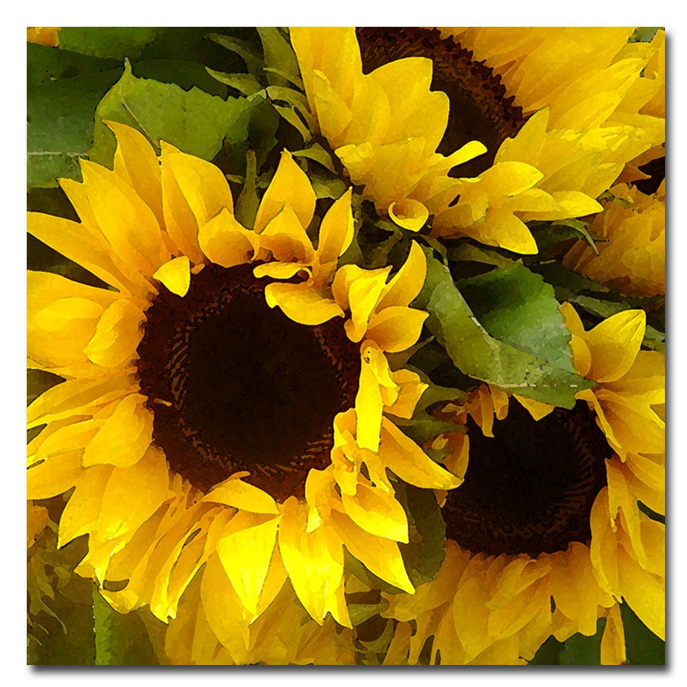 Amy Vangsgard \'Sunflowers\' Canvas Art - Multi - Free Shipping ...