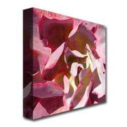 Amy Vangsgard Succulent Square Ii Canvas Art Multi Overstock 7022809