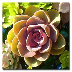 Amy Vangsgard 'Succulent Pond VI' Canvas Art