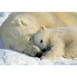 Komar 'Polar Bears' Vinyl Wall Mural