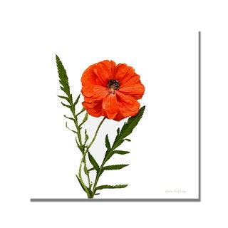 Kathie McCurdy 'Poppy' Canvas Art