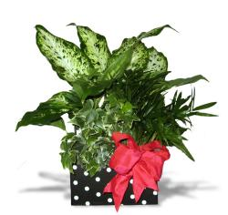 Tropical Foliage Four-inch Polka-dot Recipe Gift Box with Red Bow