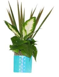 Tropical Plants in Teal Vase