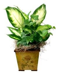 Tropical Plants in Wood Planter - Thumbnail 1