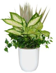 Fantasia White Tropical Planter
