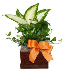 Tropical Plants in Faux Alligator Planter with Care Instructions