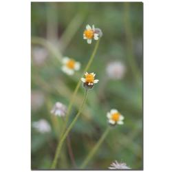 Patty Tuggle 'Floral' Canvas Art
