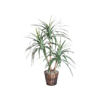 4-foot Marginata Extra Full Decorative Plant