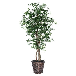 Black Olive Executive 6-foot Silk/ Polyester Decorative Plant