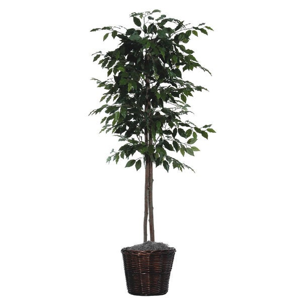6 foot Ficus Tree Decorative Plant - 6 foot Ficus Tree Decorative Plant