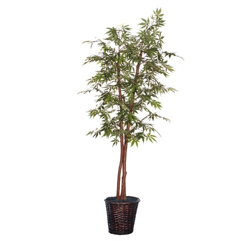 6-foot Japanese Maple Deluxe Tree