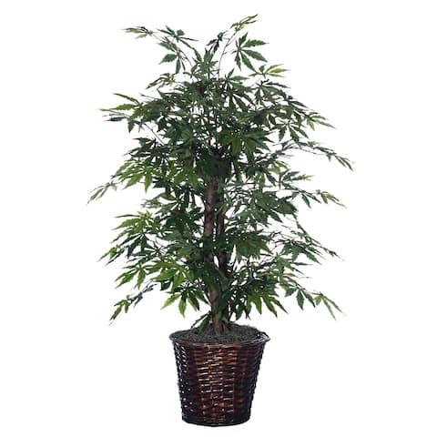 Four-foot Japanese Maple Bush Decorative Plant