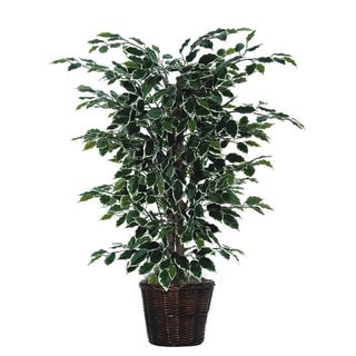 4-foot Variegated Ficus Bush - Green