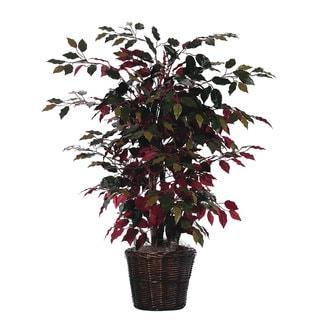 4' Capensia Silk Bush