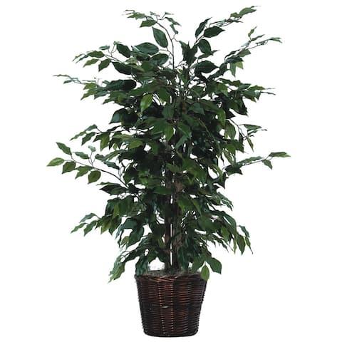 4' Green Ficus Bush