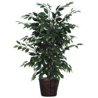 4' Green Ficus Bush