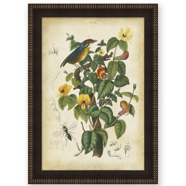 Therese Guerin 'Bird in Nature II' Wood Framed Art