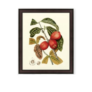 Berthe Hoola Van Nooten 'Island Fruits III' Wood Framed Art