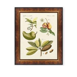 Bertuch 'Breadfruit' Wood Framed Art Print