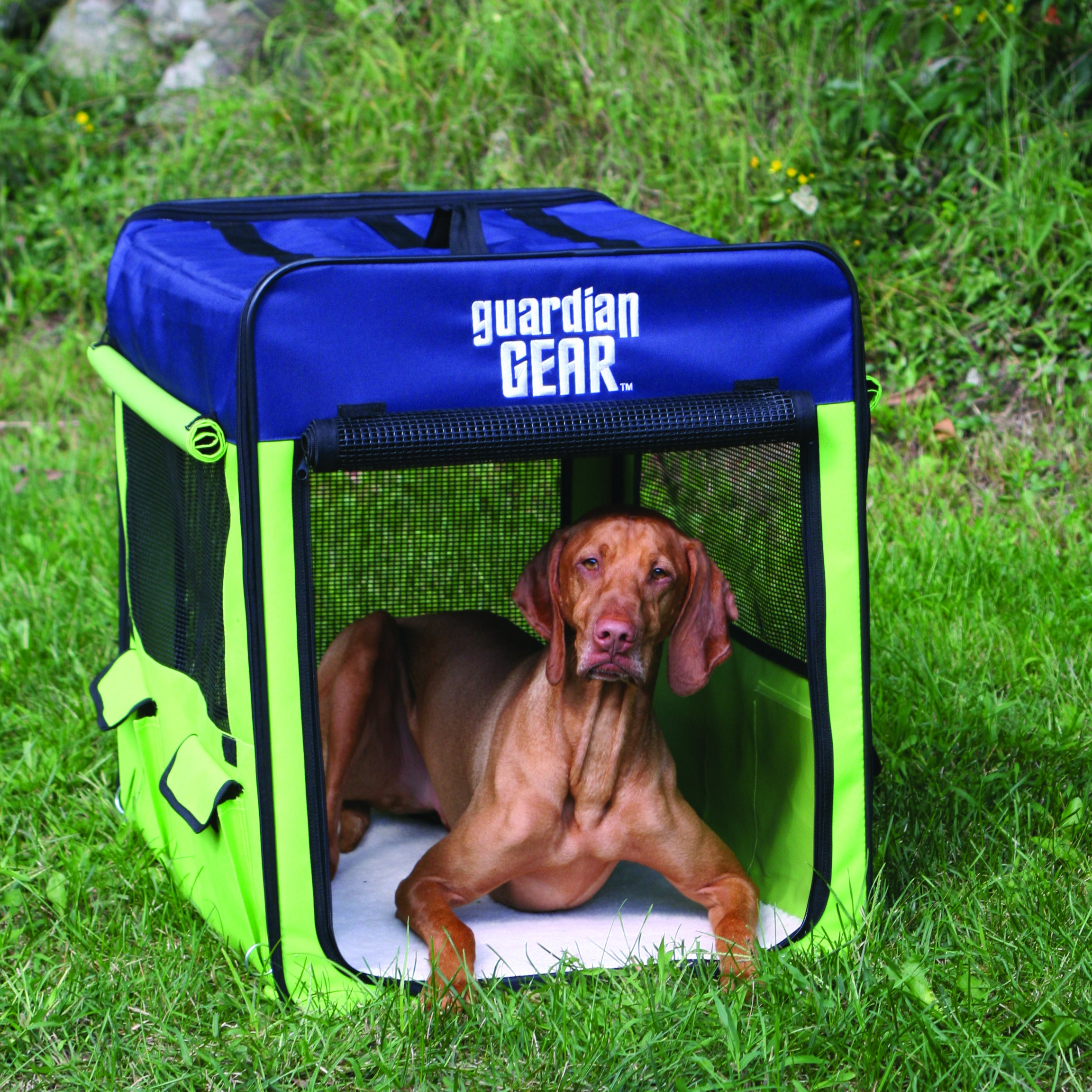 Guardian Gear Lime/ Blue Medium Collapsible Dog Crate (ZA...