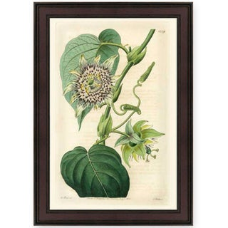 S. Watt 'Wild Flower I' American Giclee Print Art