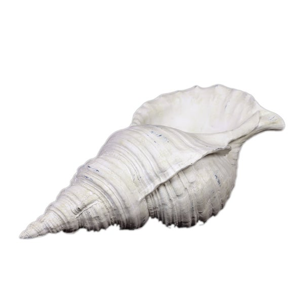 Urban Trends Collection White Resin Seashell
