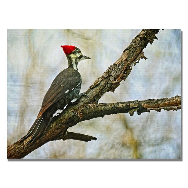 Lois Bryan 'Woodpecker II' Canvas Art