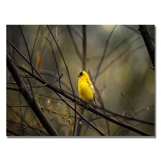Lois Bryan 'Golden Finch' Canvas Art