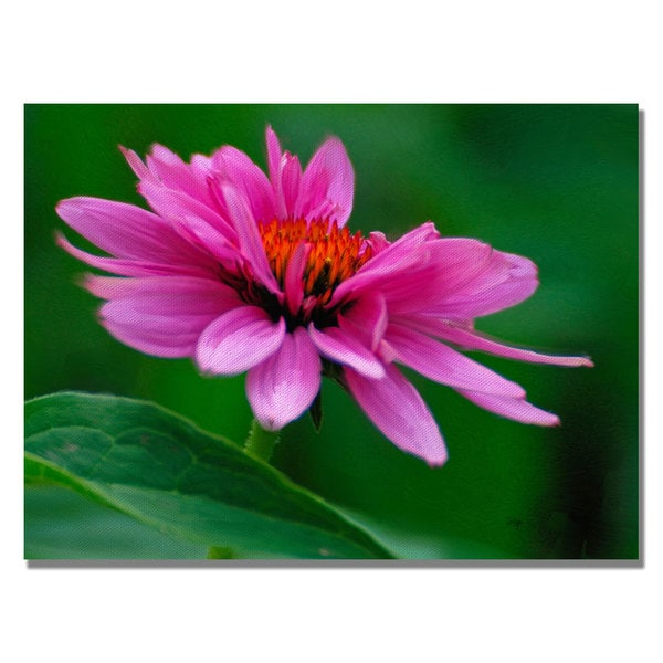 Lois Bryan 'One Petal at a Time' Canvas Art