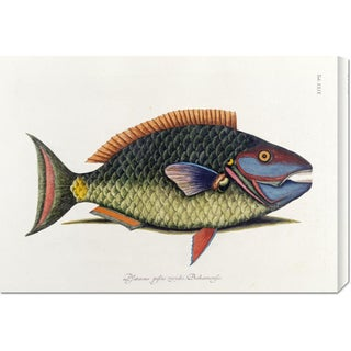 Global Gallery Mark Catesby 'The Parrot Fish' Stretched Canvas Art