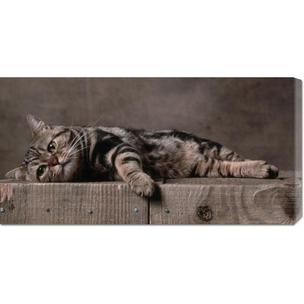 Big Canvas Co. Yann Arthus-Bertrand 'American Shorthair Brown Patched Tabby Cat' Stretched Canvas Art