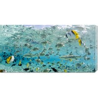 Global Gallery Michele Westmorland 'Blacktip Sharks and Tropical Fish in Bora-Bora Lagoon' Stretched Canvas Art