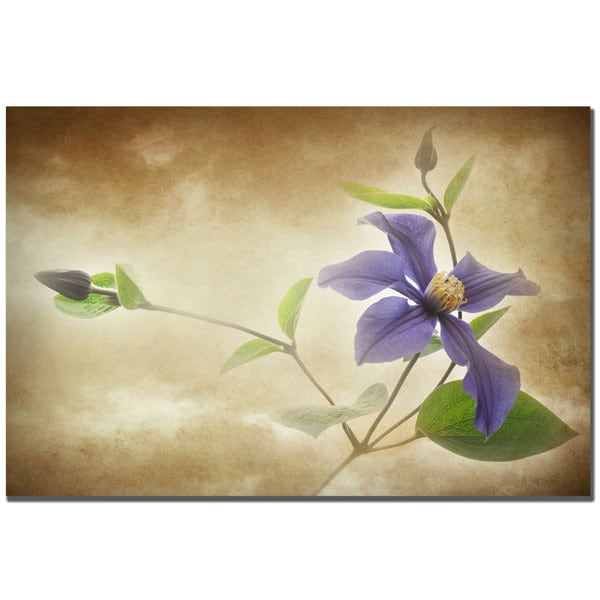 Philippe Sainte-Laudy 'Clemantis Lamiginose' Canvas Art