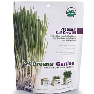 Bellrock Growers Pet Greens Cat Organic Self Grow Kit