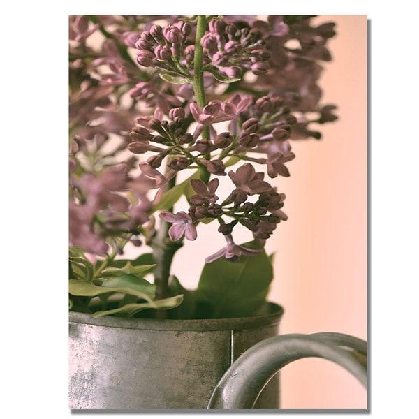 Philippe Sainte-Laudy 'Lilac II' Canvas Art