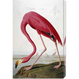 Global Gallery John James Audubon 'American Flamingo' Stretched Canvas Art
