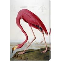 Global Gallery John James Audubon 'American Flamingo' Stretched Canvas Art
