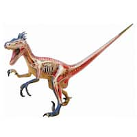 4D Vision Velociraptor Anatomy Model