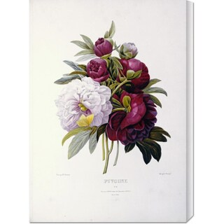 Big Canvas Co. Pierre Joseph Redoute 'Peonies' Stretched Canvas Art