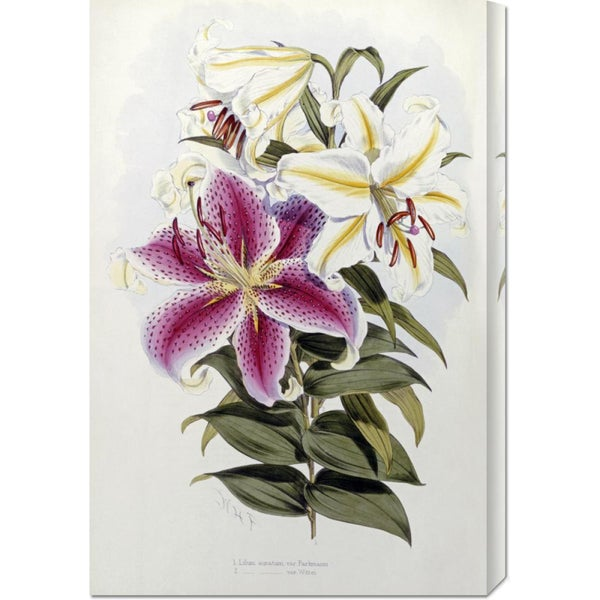 Global Gallery Henry John Elwes 'A Monograph of The Genus Lilium' Stretched Canvas Art