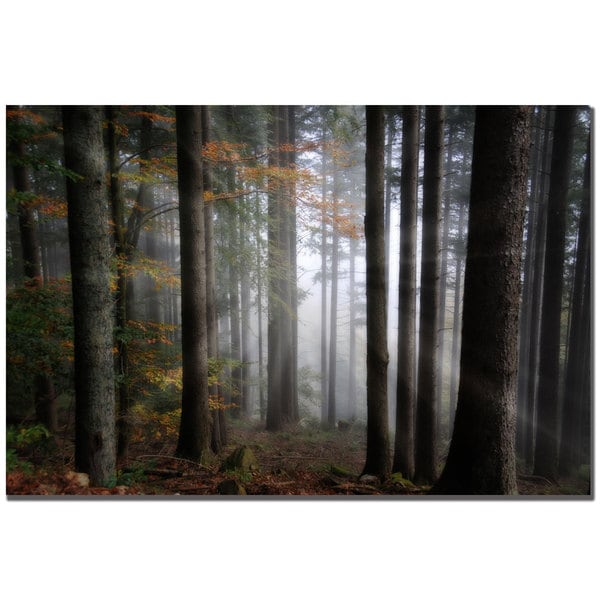 Philippe Sainte-Laudy 'Light Forest' Canvas Art