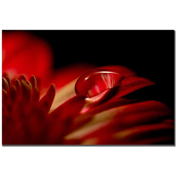 Philippe Sainte-Laudy 'Red Drop' Canvas Art Ready to Hang!