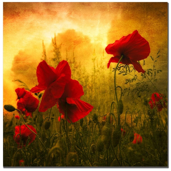 Philippe Sainte-Laudy 'Red is for Love' Canvas Art