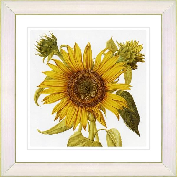 Studio Works Modern 'Vintage Botanical #36' Framed Print
