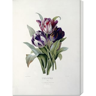 Big Canvas Co. Pierre Joseph Redoute 'Tulips' Stretched Canvas Art
